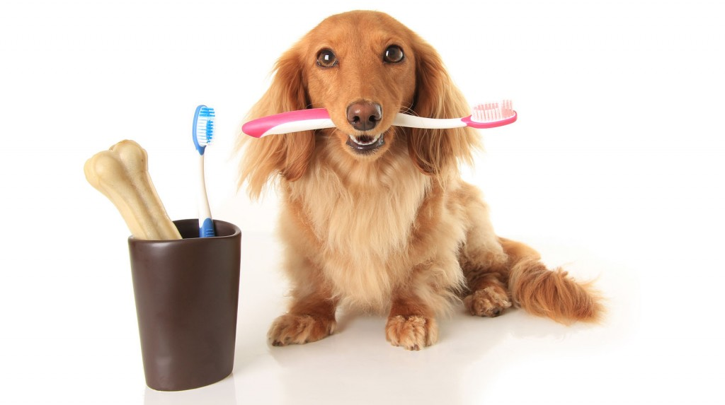 do animals have to brush their teeth